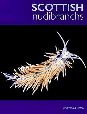 Scottish Nudibranchs